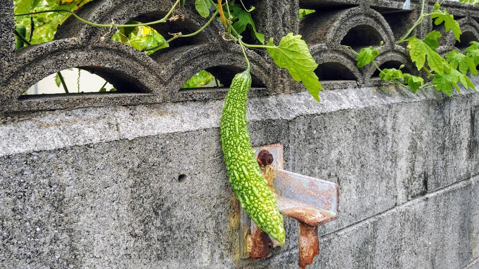 沖縄料理は絶望的にマズイ?流石に記者の舌を疑う【コラム】